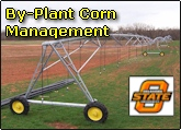 By plant corn nitrogen management for improved nitrogen use efficiency