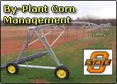 By plant corn nitrogen management for improved nitrogen use efficiency