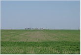 Spatial Variability in Winter Wheat