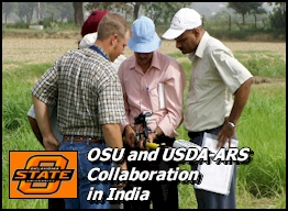 OSU and USDA-ARS Collaboration in India, Rice-Wheat Consortium