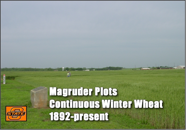 Magruder Plots, Oldest Long-Term Winter Wheat Experiment in the World