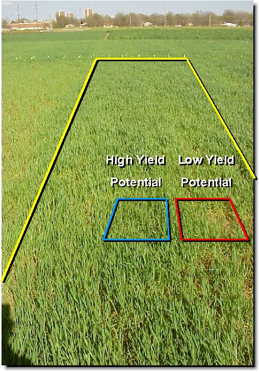 Yield Potential 222.jpg (193085 bytes)